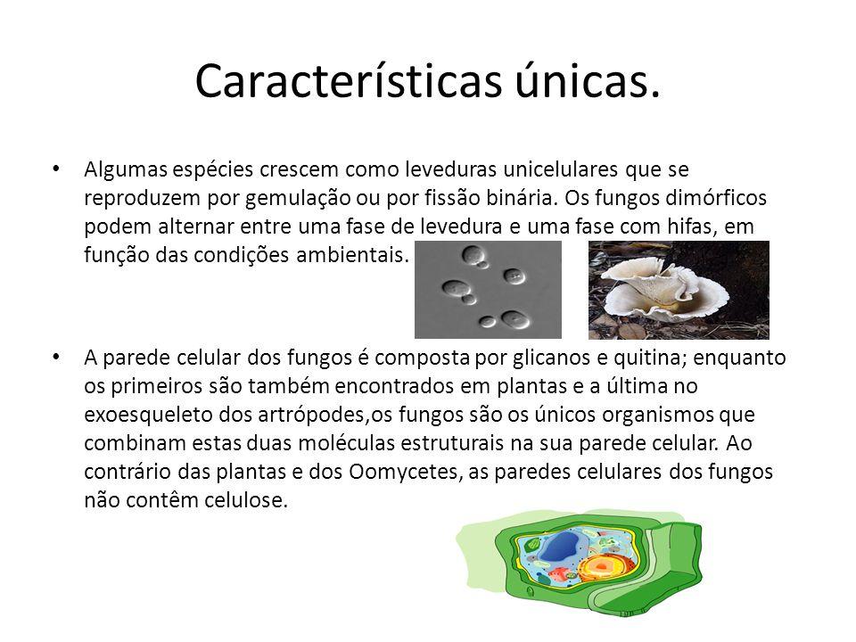 Características únicas. Algumas espécies crescem como leveduras unicelulares que se reproduzem por gemulação ou por fissão binária. Os fungos dimórfic