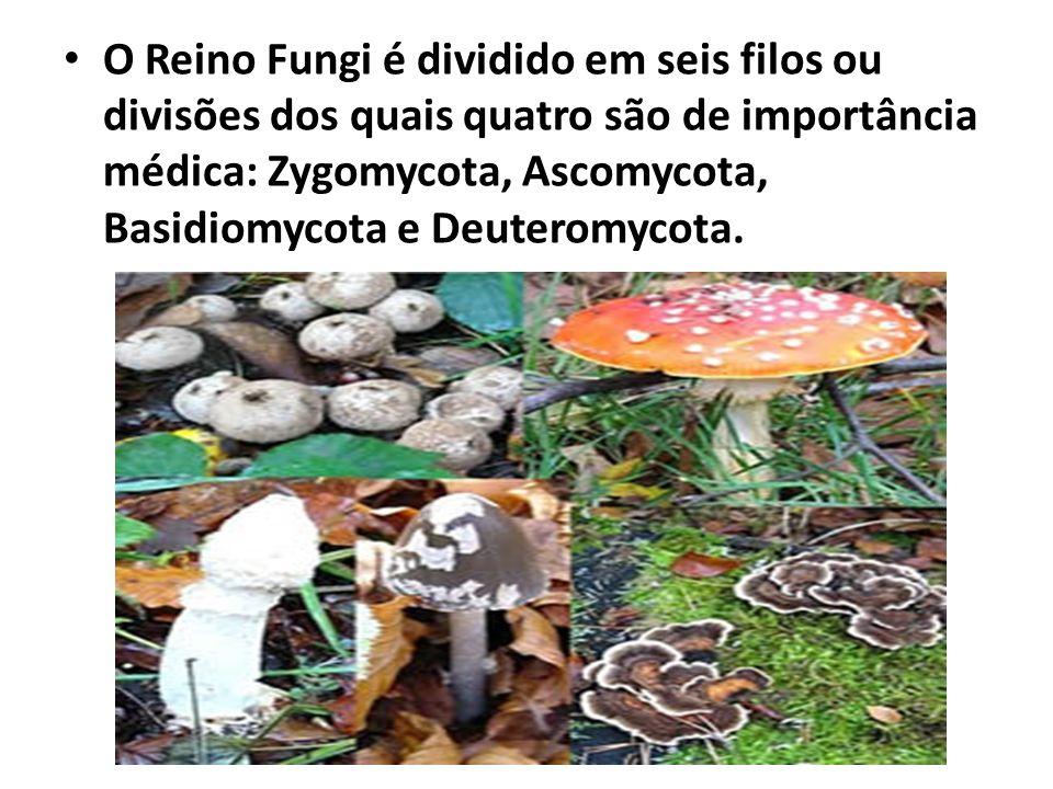 O Reino Fungi é dividido em seis filos ou divisões dos quais quatro são de importância médica: Zygomycota, Ascomycota, Basidiomycota e Deuteromycota.