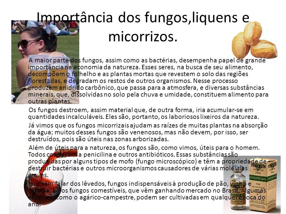 Importância dos fungos,liquens e micorrizos. A maior parte dos fungos, assim como as bactérias, desempenha papel de grande importância na economia da
