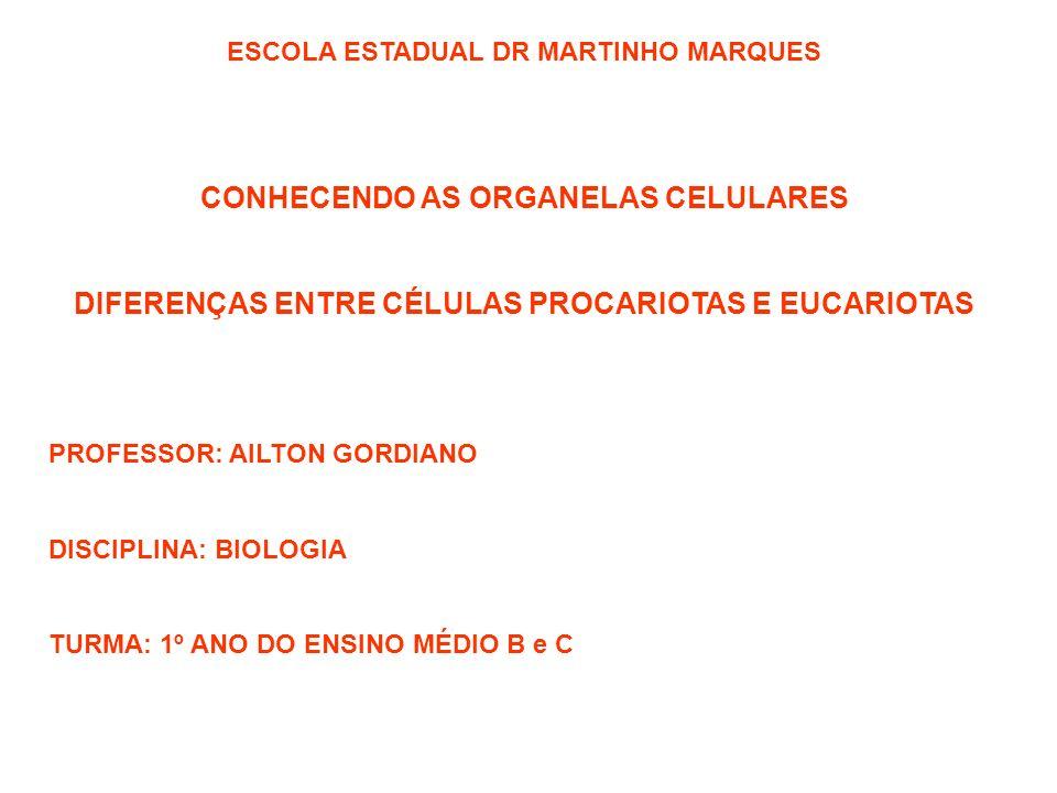 ESCOLA ESTADUAL DR MARTINHO MARQUES CONHECENDO AS ORGANELAS CELULARES DIFERENÇAS ENTRE CÉLULAS PROCARIOTAS E EUCARIOTAS PROFESSOR: AILTON GORDIANO DIS