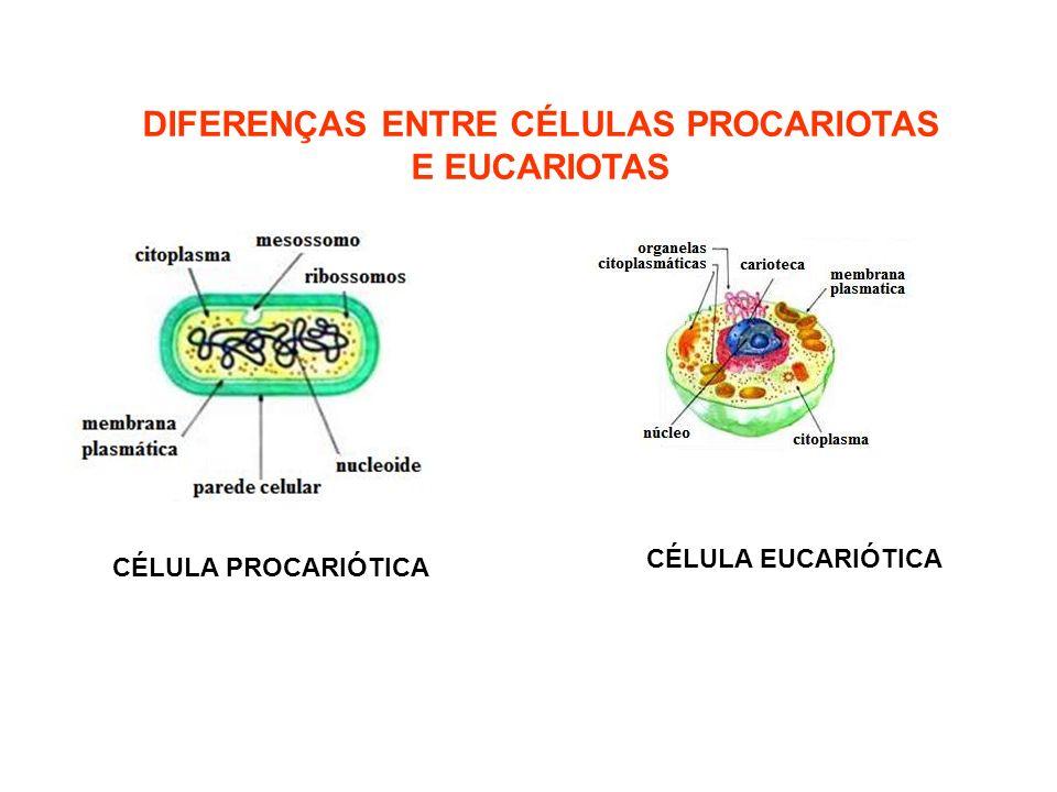 DIFERENÇAS ENTRE CÉLULAS PROCARIOTAS E EUCARIOTAS CÉLULA PROCARIÓTICA CÉLULA EUCARIÓTICA