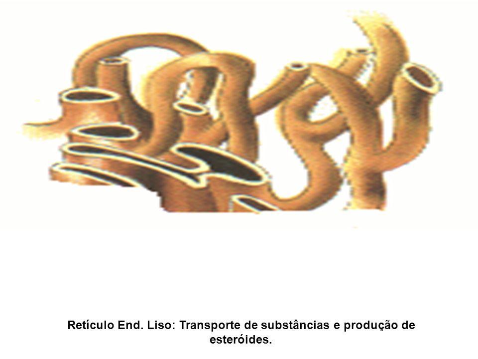 Retículo End. Liso: Transporte de substâncias e produção de esteróides.