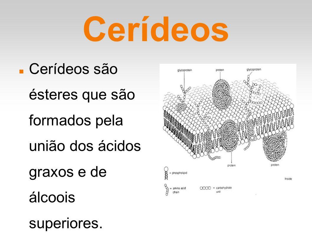 Classificação dos Cerídeos Os cerídeos podem ser classificados como lipídios simples e podem ser produzidos tanto por animais como por vegetais, sendo genericamente chamados de ceras.