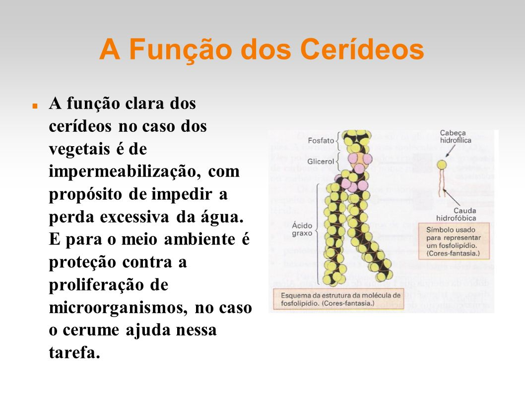 A Função dos Cerídeos A função clara dos cerídeos no caso dos vegetais é de impermeabilização, com propósito de impedir a perda excessiva da água.
