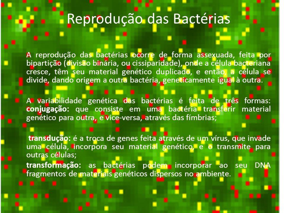 Reprodução das Bactérias As bactérias também podem originar esporos, em condições ambientes desfavoráveis à reprodução (altas ou baixas temperaturas, presença de substâncias tóxicas, etc).