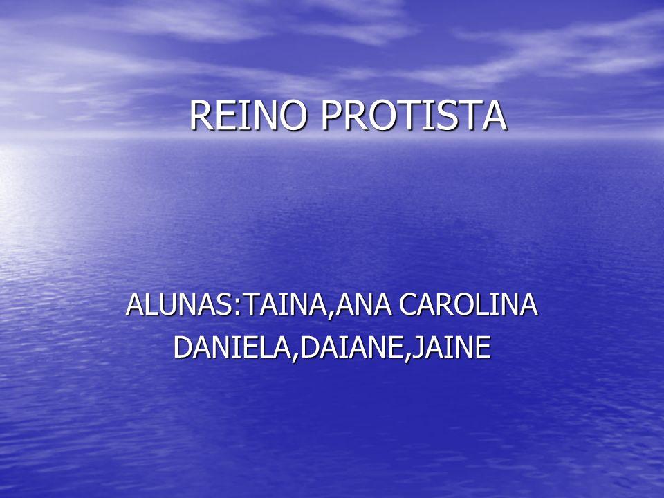 REINO PROTISTA ALUNAS:TAINA,ANA CAROLINA DANIELA,DAIANE,JAINE