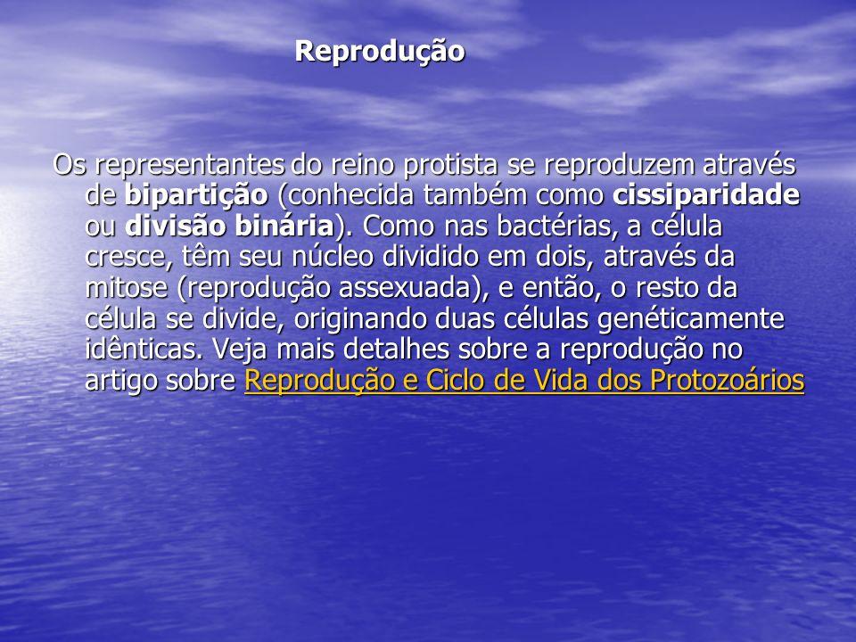 Reprodução Reprodução Os representantes do reino protista se reproduzem através de bipartição (conhecida também como cissiparidade ou divisão binária)