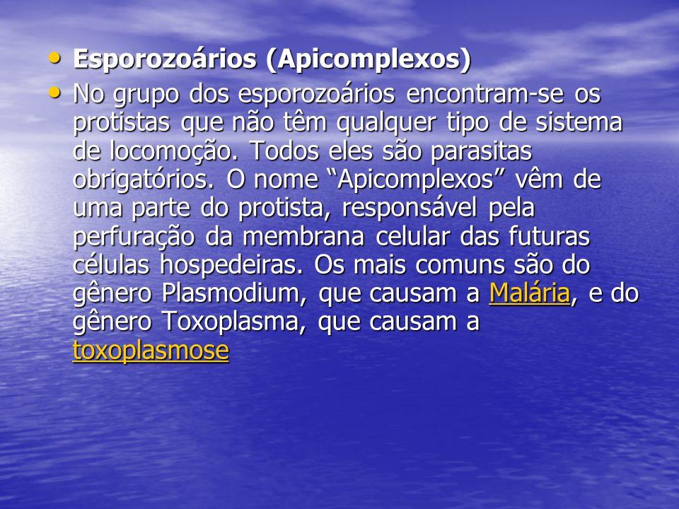 Esporozoários (Apicomplexos) Esporozoários (Apicomplexos) No grupo dos esporozoários encontram-se os protistas que não têm qualquer tipo de sistema de