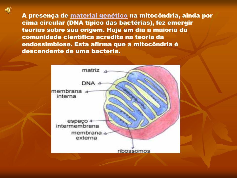A presença de material genético na mitocôndria, ainda por cima circular (DNA típico das bactérias), fez emergir teorias sobre sua origem.