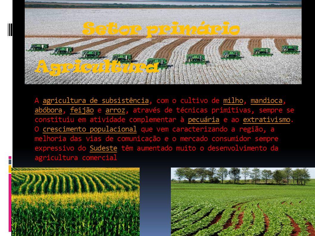 Setor primário Agricultura A agricultura de subsistência, com o cultivo de milho, mandioca, abóbora, feijão e arroz, através de técnicas primitivas, s