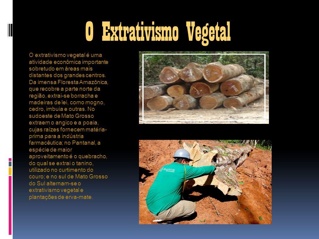 O Extrativismo Vegetal O extrativismo vegetal é uma atividade econômica importante sobretudo em áreas mais distantes dos grandes centros. Da imensa Fl