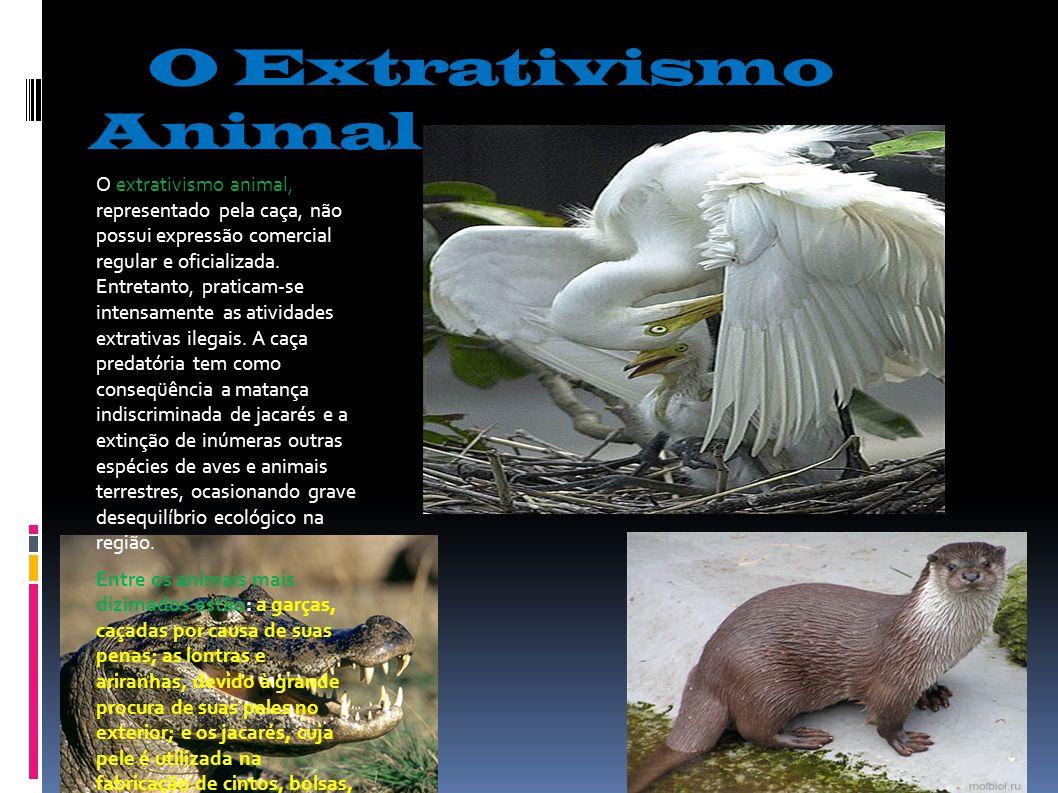 O Extrativismo Animal O extrativismo animal, representado pela caça, não possui expressão comercial regular e oficializada. Entretanto, praticam-se in