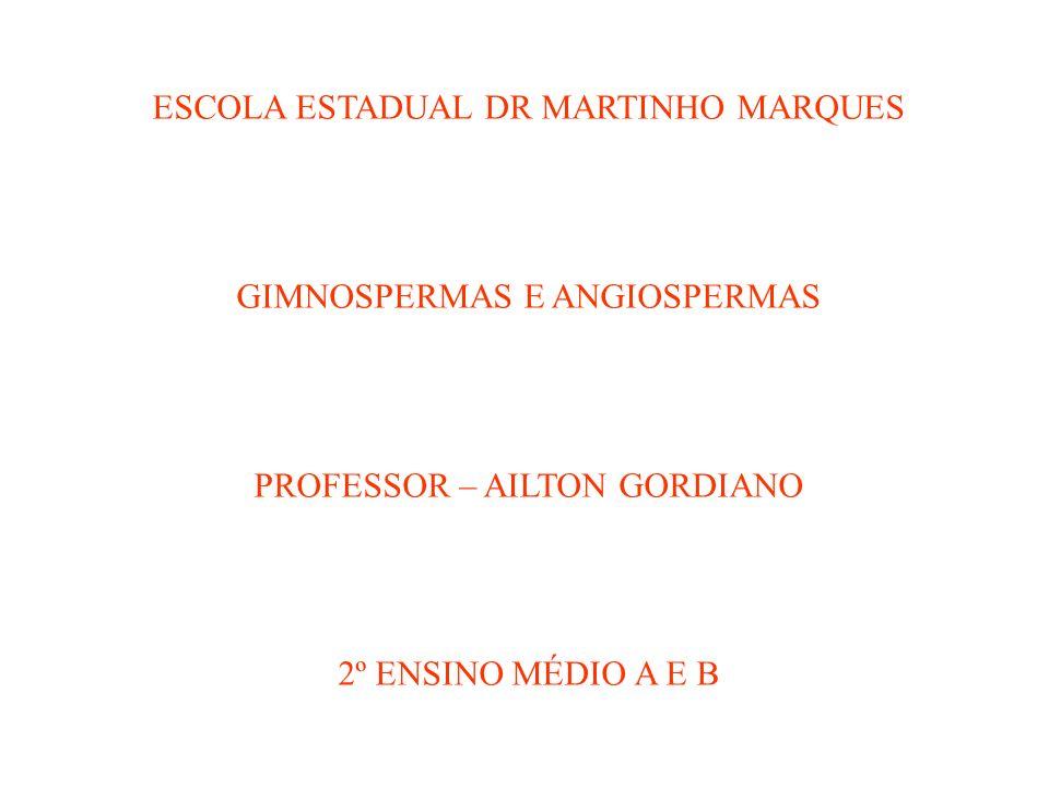 ESCOLA ESTADUAL DR MARTINHO MARQUES GIMNOSPERMAS E ANGIOSPERMAS PROFESSOR – AILTON GORDIANO 2º ENSINO MÉDIO A E B