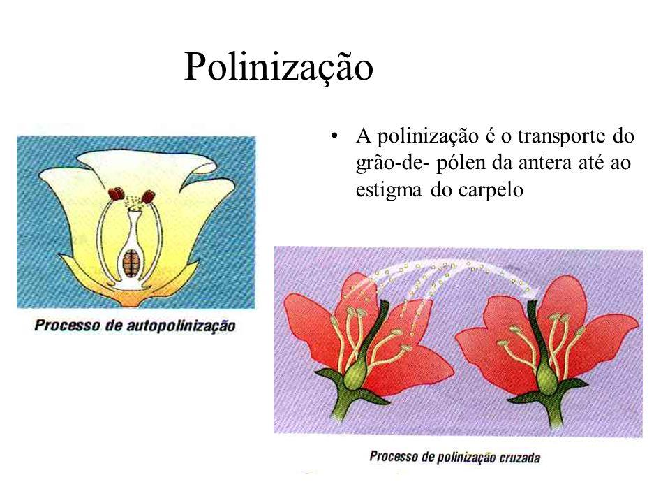 Polinização A polinização é o transporte do grão-de- pólen da antera até ao estigma do carpelo