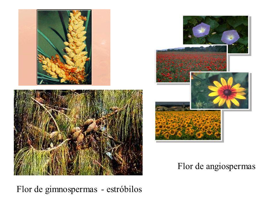 Flor de angiospermas Flor de gimnospermas - estróbilos