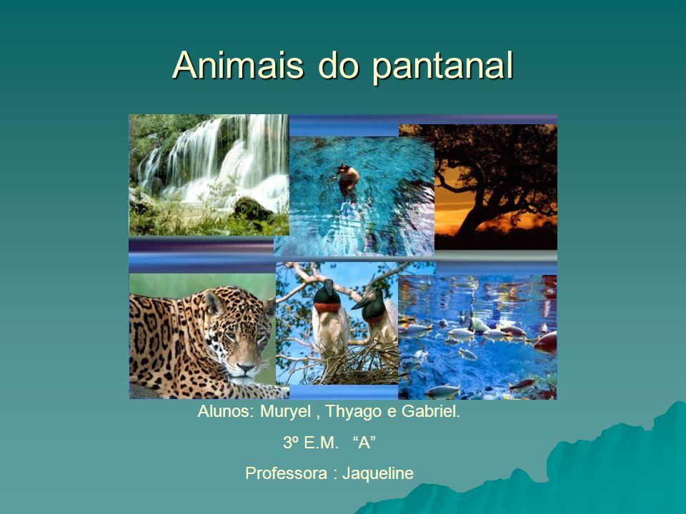 Animais do pantanal Alunos: Muryel, Thyago e Gabriel. 3º E.M. A Professora : Jaqueline