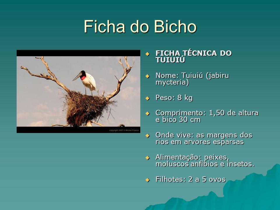 Você sabia.Que o tuiuiú é uma das maiores aves da América do Sul.
