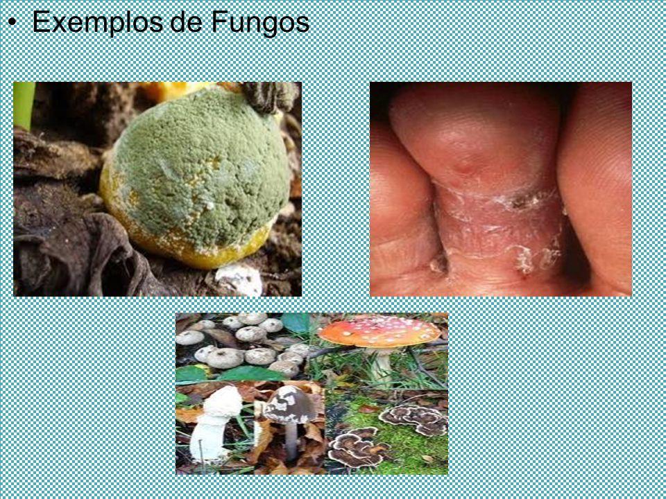 Exemplos de Fungos