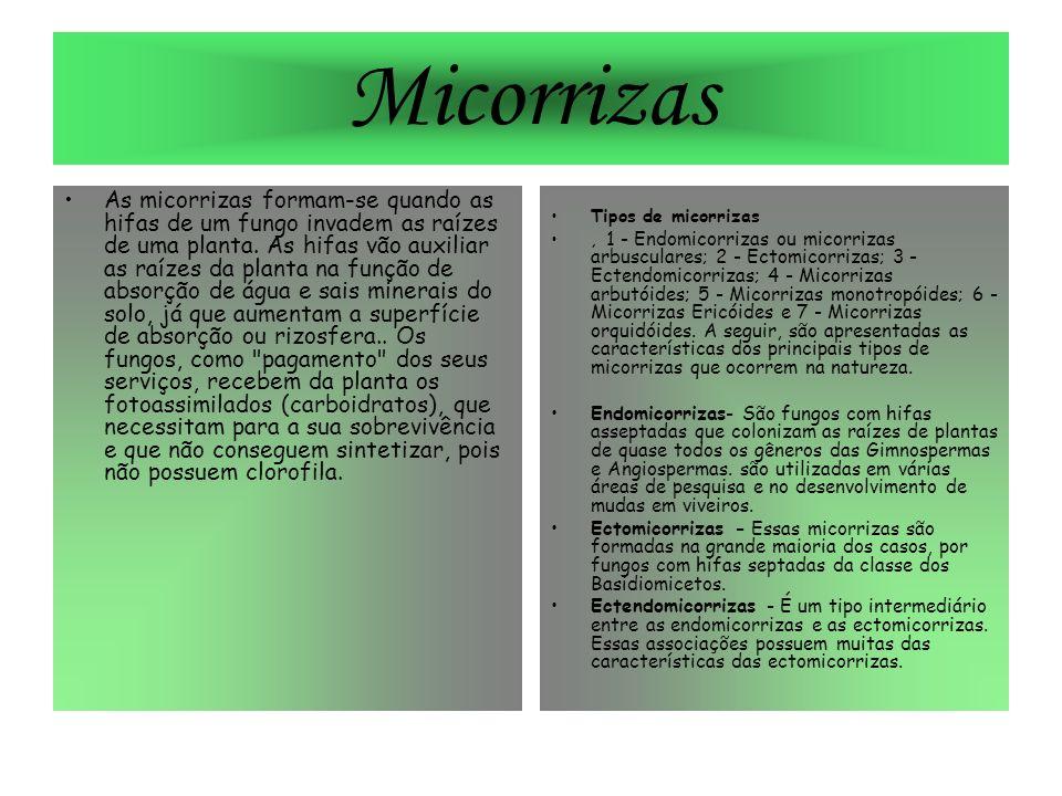 Micorrizas As micorrizas formam-se quando as hifas de um fungo invadem as raízes de uma planta. As hifas vão auxiliar as raízes da planta na função de