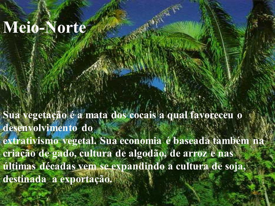 Meio-Norte Sua vegetação é a mata dos cocais a qual favoreceu o desenvolvimento do extrativismo vegetal. Sua economia é baseada também na criação de g