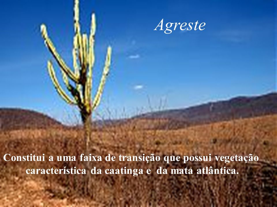 Agreste Constitui a uma faixa de transição que possui vegetação característica da caatinga e da mata atlântica.