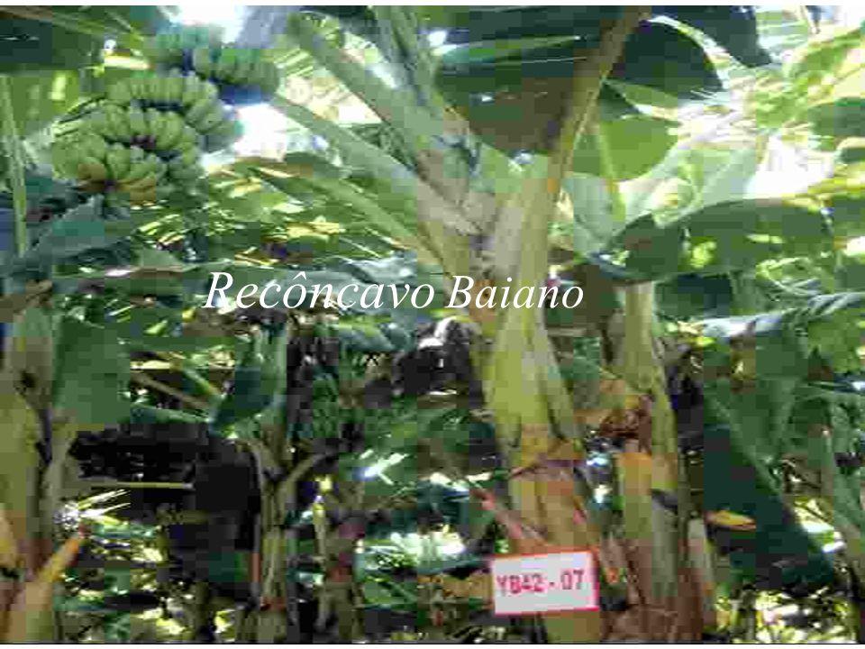 Recôncavo Baiano