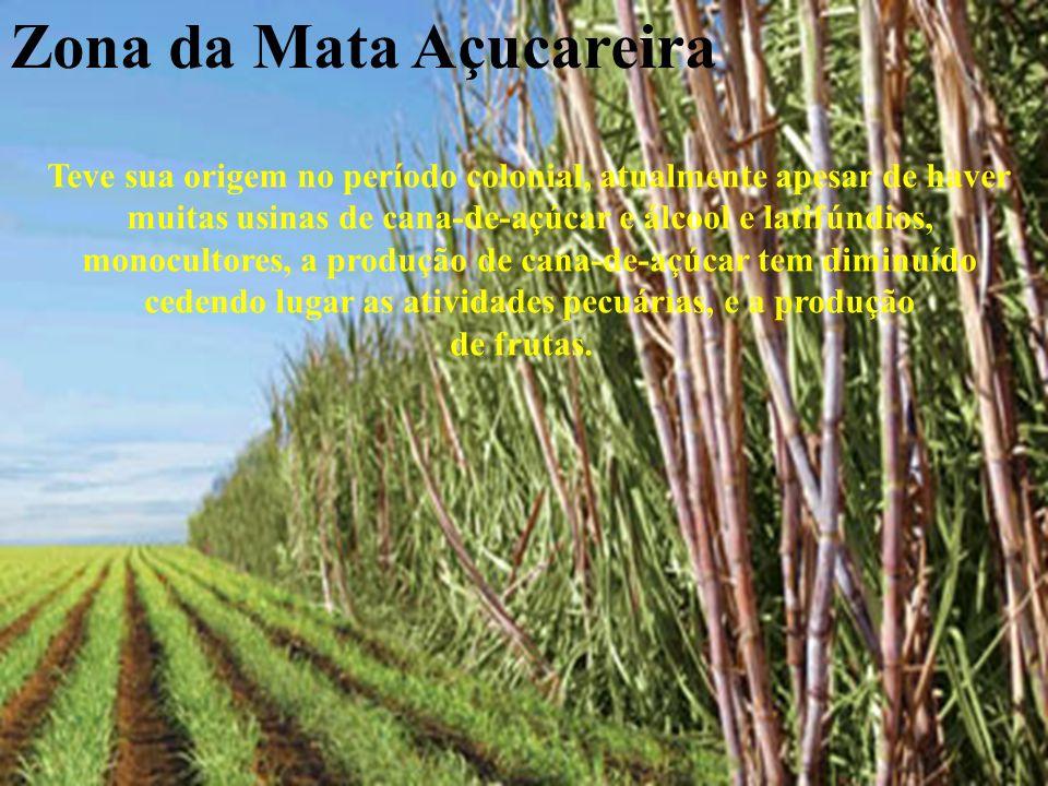 Zona da Mata Açucareira Teve sua origem no período colonial, atualmente apesar de haver muitas usinas de cana-de-açúcar e álcool e latifúndios, monocu