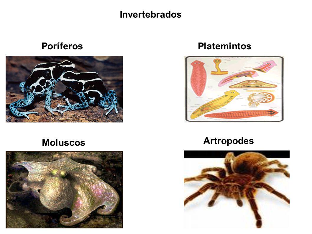 Invertebrados PoríferosPlatemintos Moluscos Artropodes
