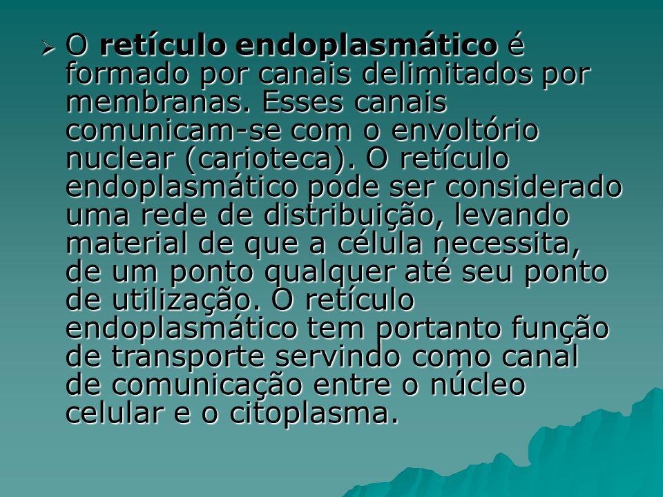 O retículo endoplasmático é formado por canais delimitados por membranas.