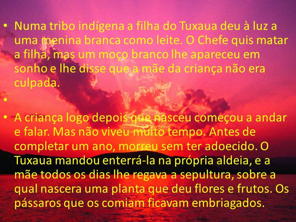 Numa tribo indígena a filha do Tuxaua deu à luz a uma menina branca como leite. O Chefe quis matar a filha, mas um moço branco lhe apareceu em sonho e