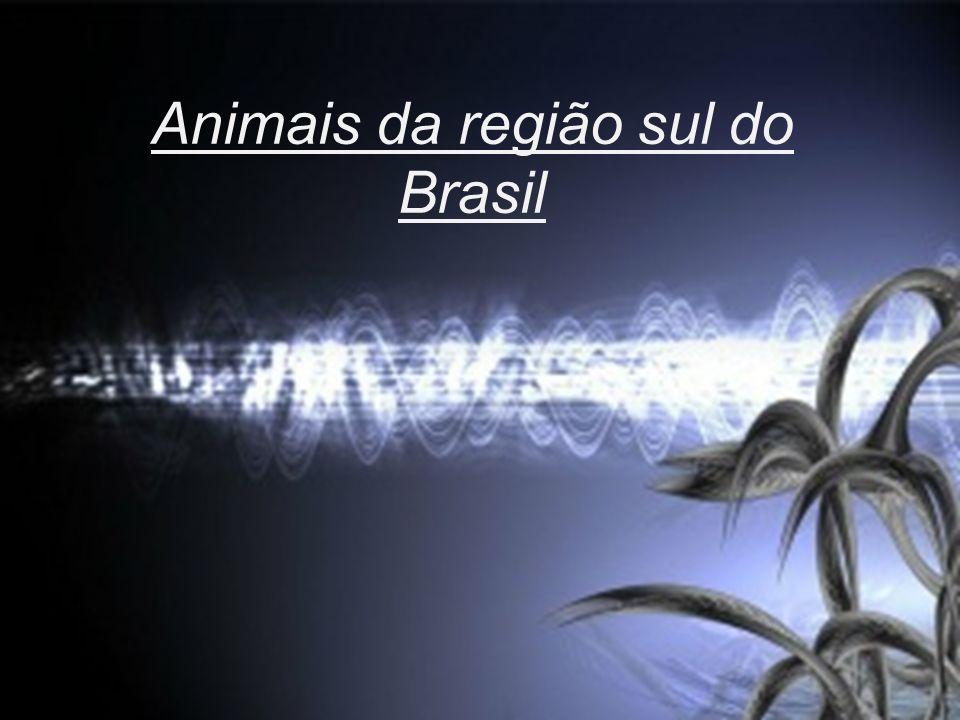 Clique para editar o estilo do subtítulo mestre 13/09/11 Animais da região sul do Brasil