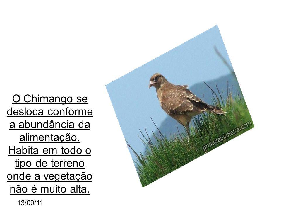 13/09/11 O Chimango se desloca conforme a abundância da alimentação.