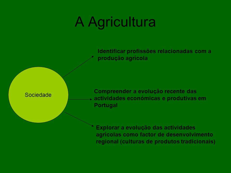 A Agricultura Sociedade Identificar profissões relacionadas com a produção agrícola Compreender a evolução recente das actividades económicas e produt
