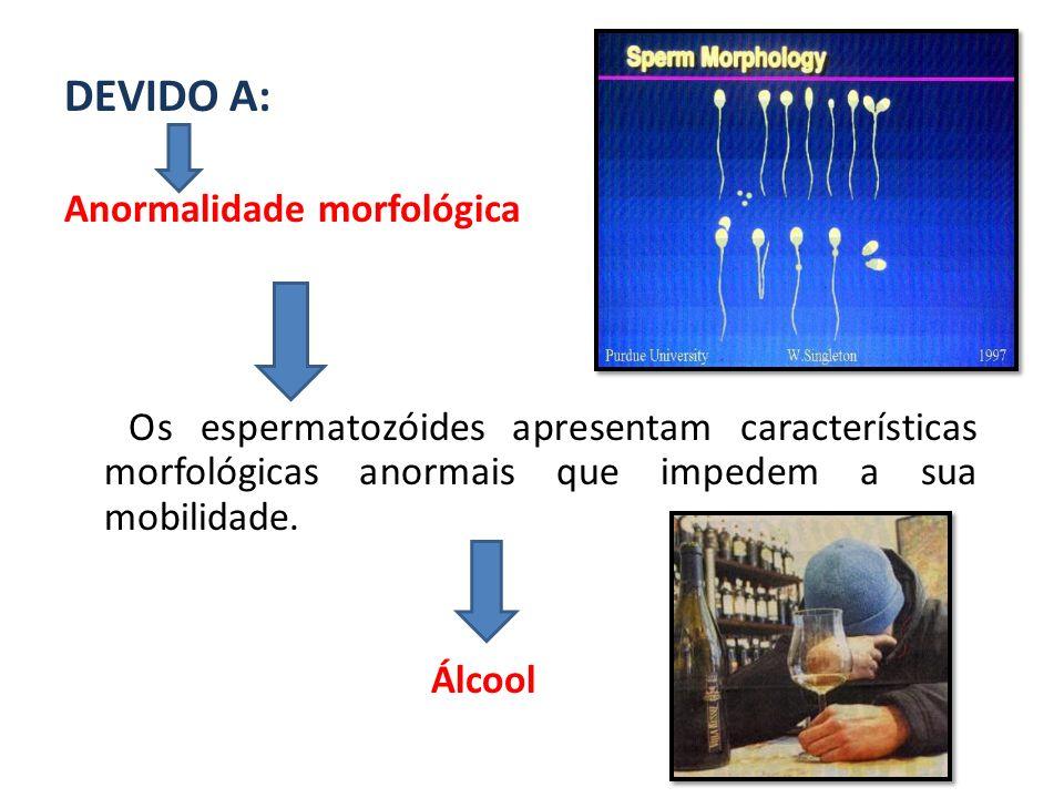 DEVIDO A: Anormalidade morfológica Os espermatozóides apresentam características morfológicas anormais que impedem a sua mobilidade. Álcool