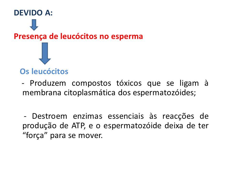 DEVIDO A: Presença de leucócitos no esperma Os leucócitos - Produzem compostos tóxicos que se ligam à membrana citoplasmática dos espermatozóides; - D