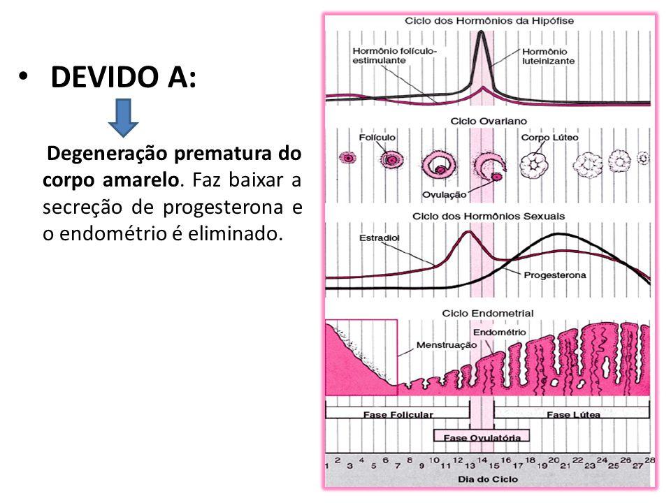DEVIDO A: Degeneração prematura do corpo amarelo. Faz baixar a secreção de progesterona e o endométrio é eliminado.