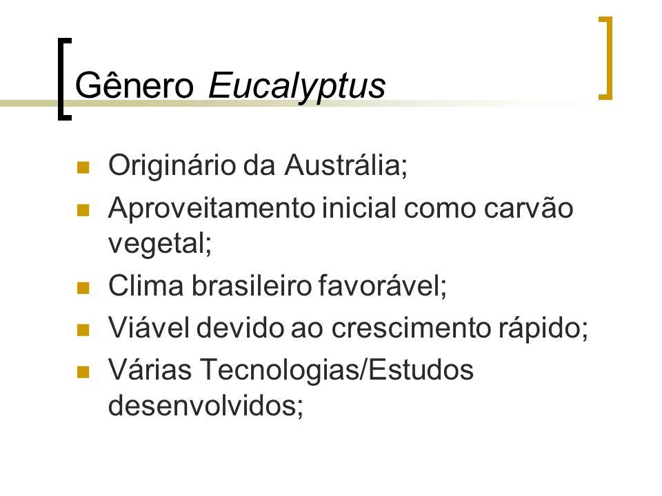 Gênero Eucalyptus Originário da Austrália; Aproveitamento inicial como carvão vegetal; Clima brasileiro favorável; Viável devido ao crescimento rápido