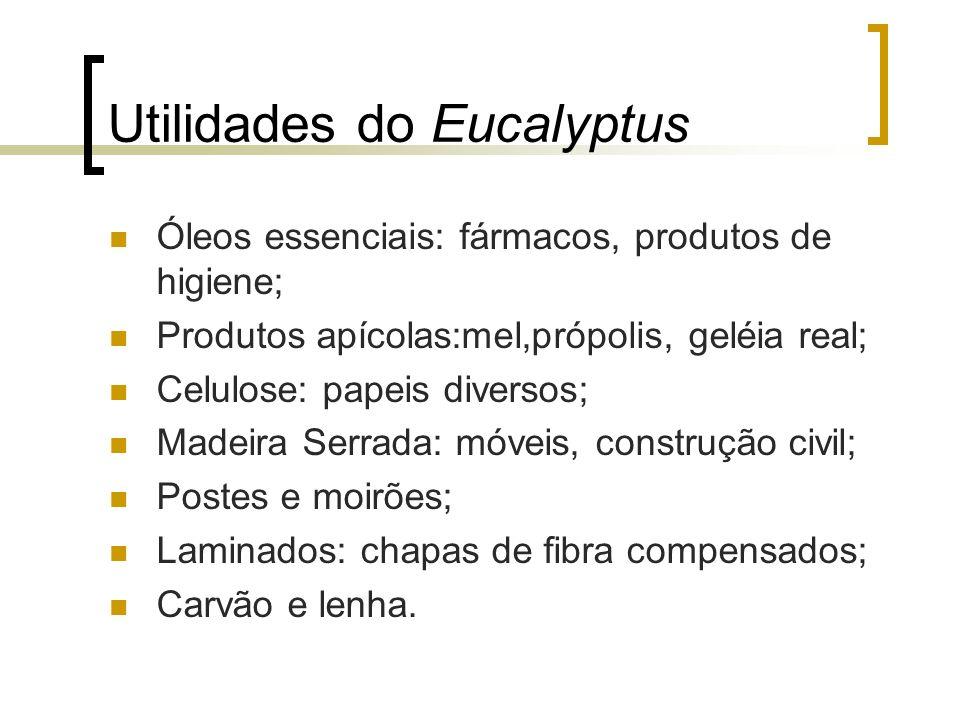 Utilidades do Eucalyptus Óleos essenciais: fármacos, produtos de higiene; Produtos apícolas:mel,própolis, geléia real; Celulose: papeis diversos; Made