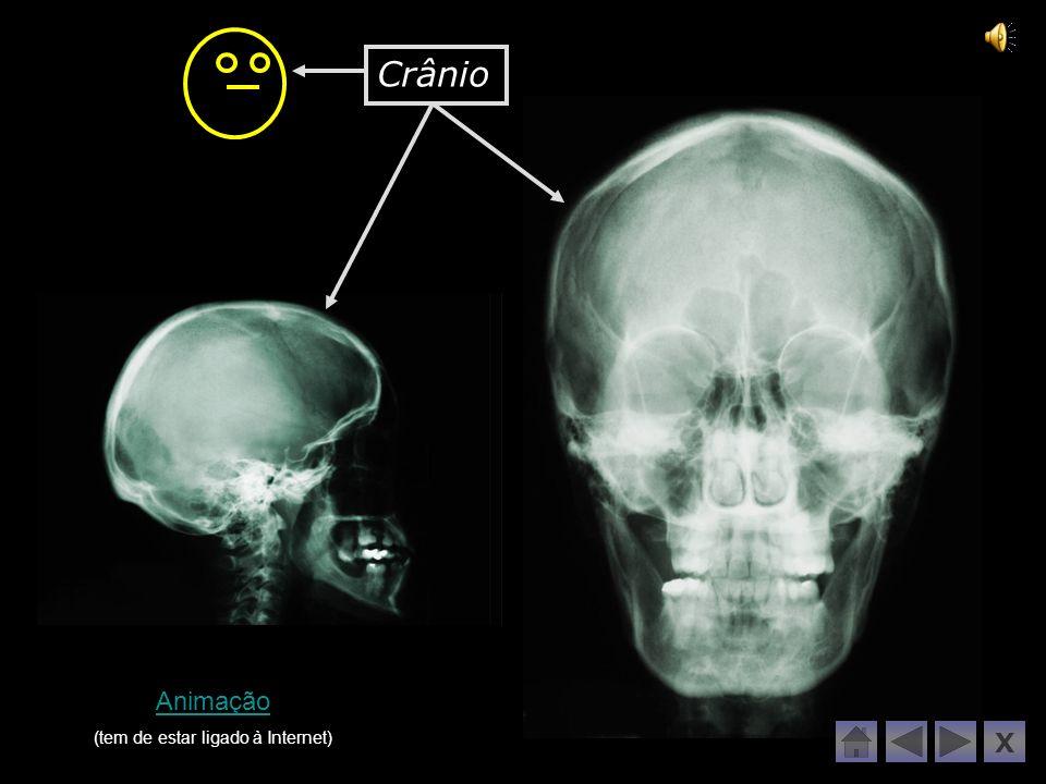 O nosso esqueleto tem mais de 200 ossos!!! Escolhe o que te apetece fazer: X Vamos ver o nosso esqueleto!!! Agora vamos ver quem sabe!!! Uma viagem ao