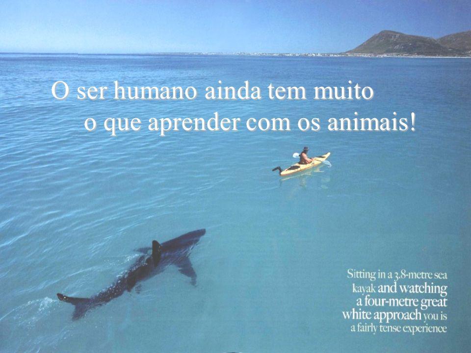 Um tubarão-fêmea, um homem, um muito obrigada por ter salvo a minha vida.