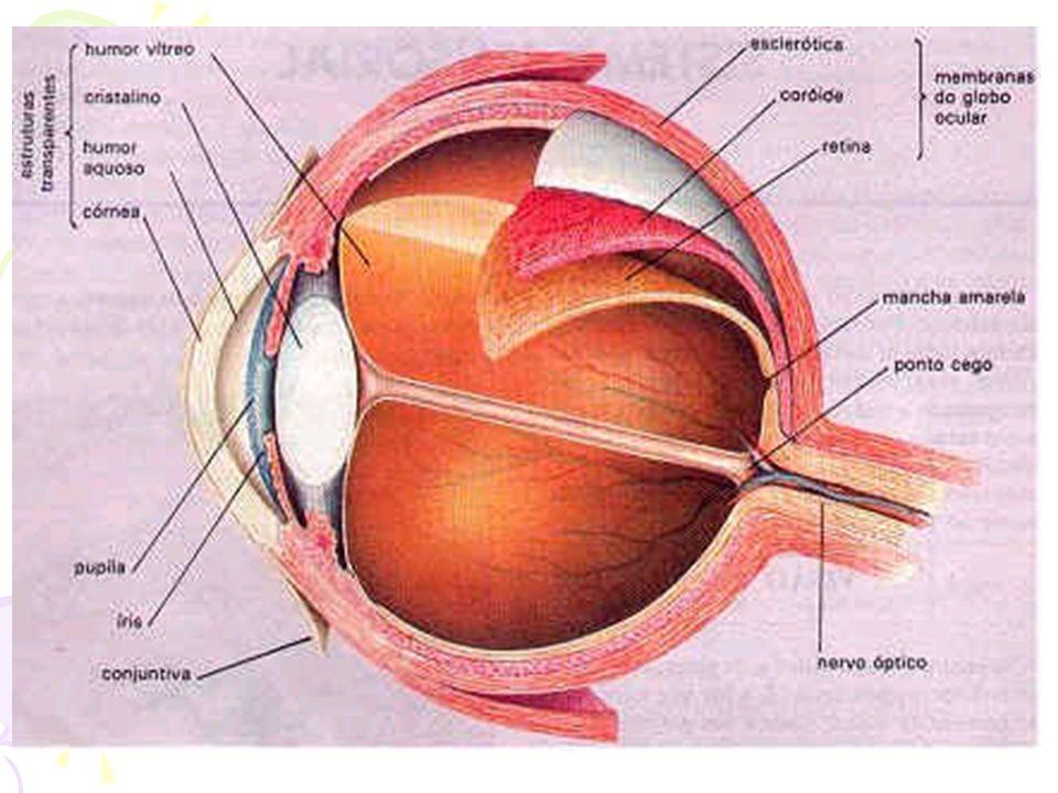 Manutenção da saúde Prevenção secundária: detectação da doença em estágio inicial –Recomendação para avaliação de câncer intestinal (retossigmoidoscopia), pesquisa de sangue oculto –Auto-exame mensal de mama, mamografia anual –Recomenda-se avaliação anual para tb e diabetes –Exames anual para avaliação da próstata –Exame anual com teste de Papanicolaou –Avaliação anual da visão (glaucoma, catarata)