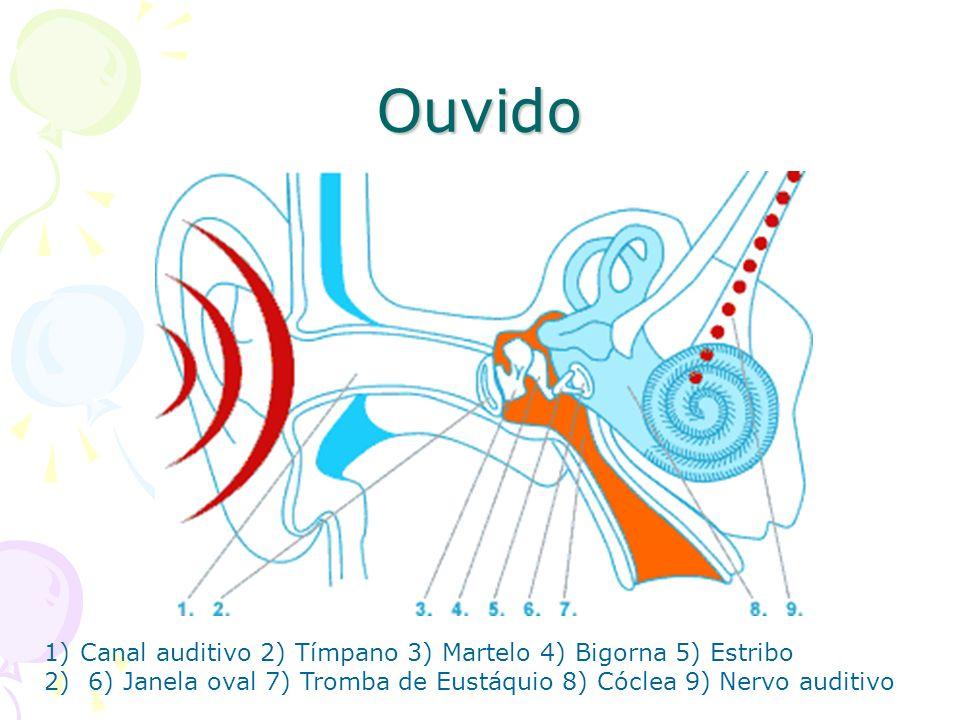 Ouvido 1)Canal auditivo 2) Tímpano 3) Martelo 4) Bigorna 5) Estribo 2) 6) Janela oval 7) Tromba de Eustáquio 8) Cóclea 9) Nervo auditivo