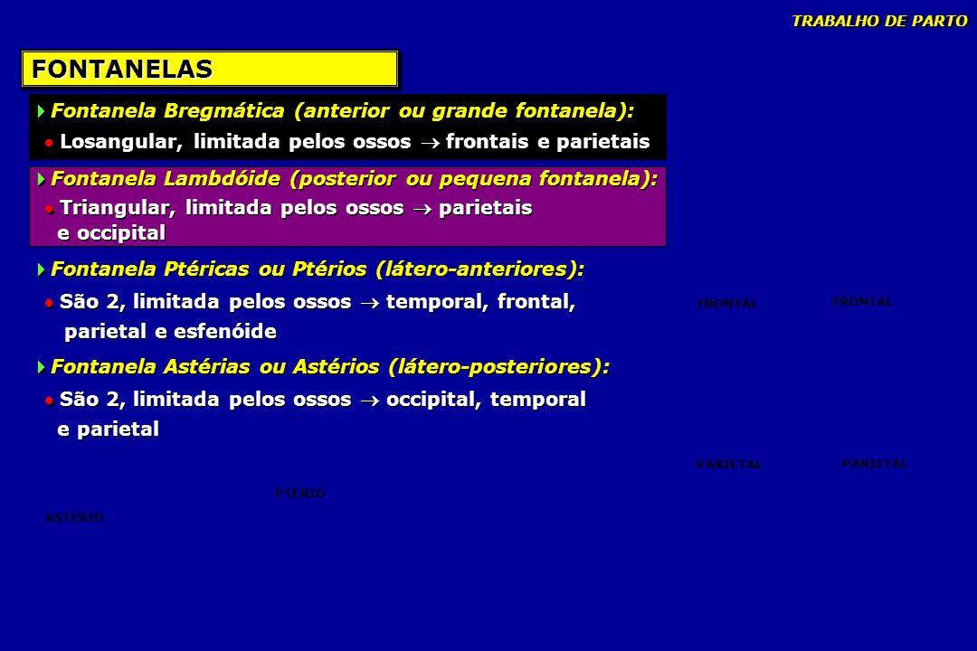 FONTANELASFONTANELAS Fontanela Bregmática (anterior ou grande fontanela): Losangular, limitada pelos ossos frontais e parietais Fontanela Lambdóide (p