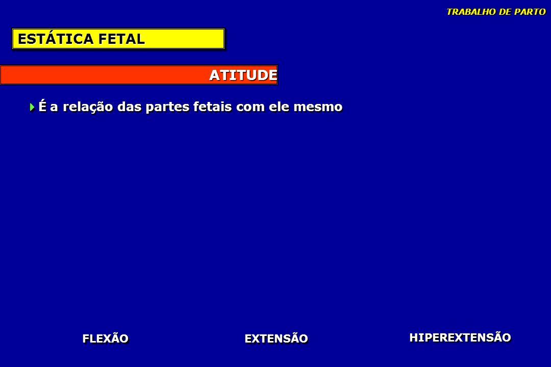 ATITUDE ESTÁTICA FETAL É a relação das partes fetais com ele mesmo FLEXÃO EXTENSÃO HIPEREXTENSÃO TRABALHO DE PARTO