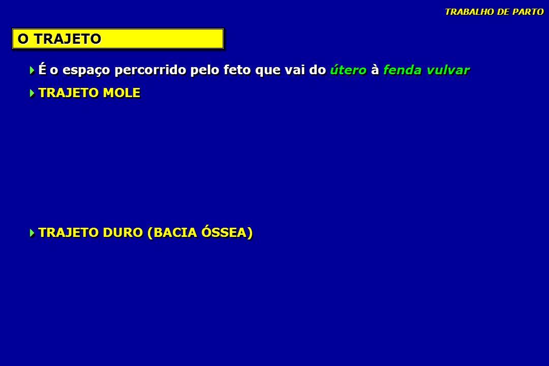 FASES - 6 2 o PERÍODO-EXPULSÃO TRABALHO DE PARTO