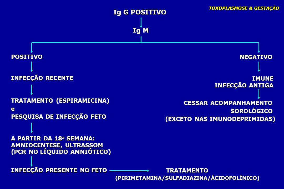 TOXOPLASMOSE & GESTAÇÃO Ig G POSITIVO POSITIVO NEGATIVO IMUNE INFECÇÃO ANTIGA IMUNE INFECÇÃO ANTIGA INFECÇÃO RECENTE CESSAR ACOMPANHAMENTO SOROLÓGICO