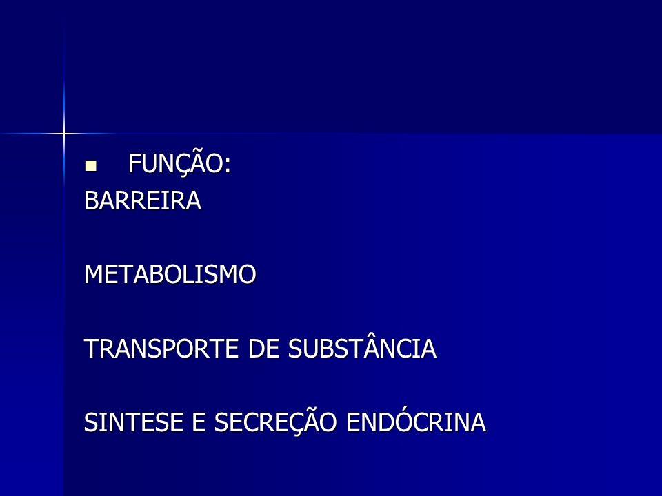 FUNÇÃO: FUNÇÃO:BARREIRAMETABOLISMO TRANSPORTE DE SUBSTÂNCIA SINTESE E SECREÇÃO ENDÓCRINA