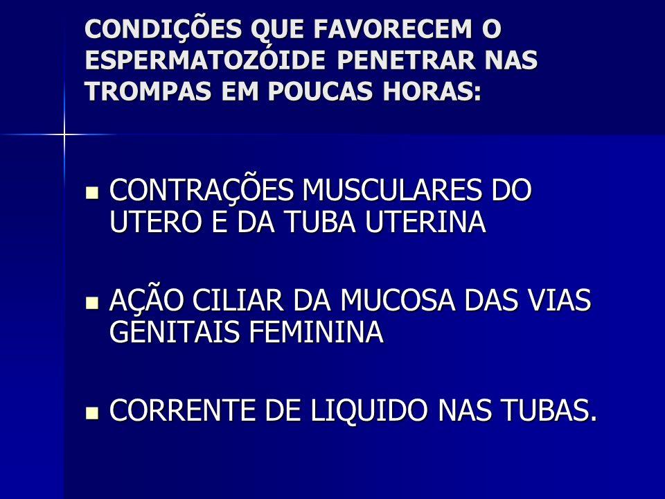 FERILIZAÇÃO PROVE A NOVA CELULA, COM NÚMERO CARACTERÍSTICO DE CROMOSSOMO.
