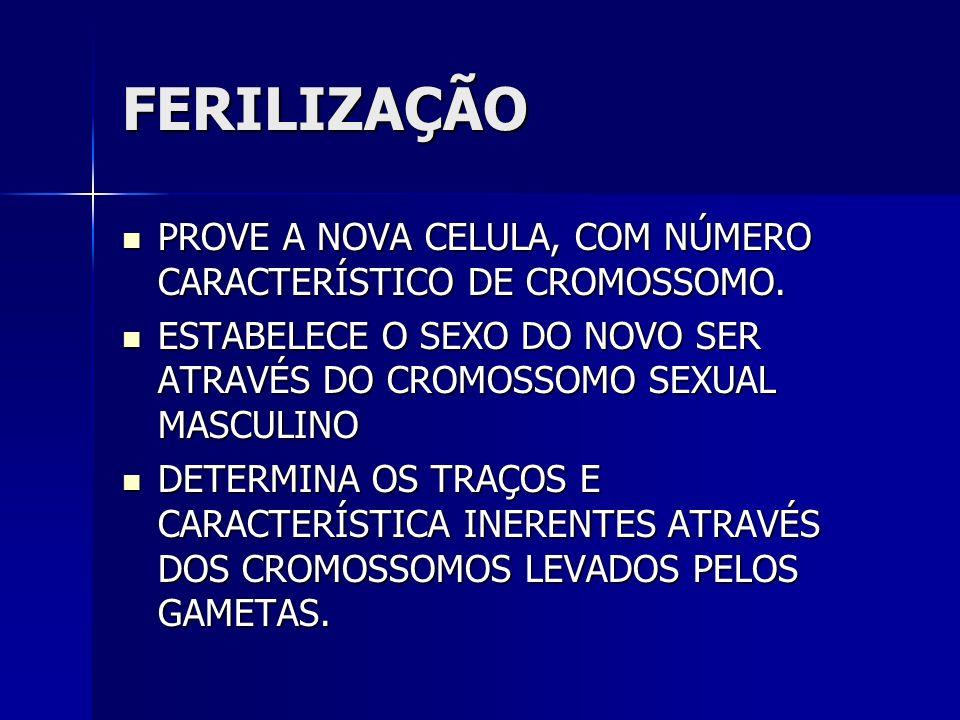 FERILIZAÇÃO PROVE A NOVA CELULA, COM NÚMERO CARACTERÍSTICO DE CROMOSSOMO. PROVE A NOVA CELULA, COM NÚMERO CARACTERÍSTICO DE CROMOSSOMO. ESTABELECE O S
