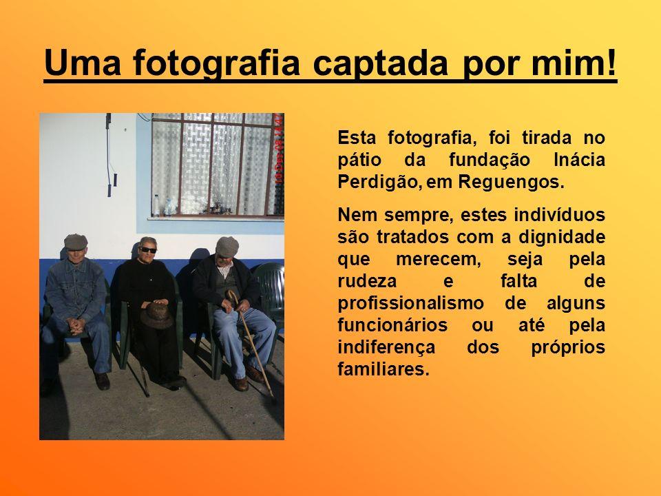 Uma fotografia captada por mim! Esta fotografia, foi tirada no pátio da fundação Inácia Perdigão, em Reguengos. Nem sempre, estes indivíduos são trata